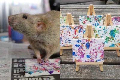 Rats painting pictures which sold faster than iPhones